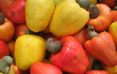 cashew-fruits