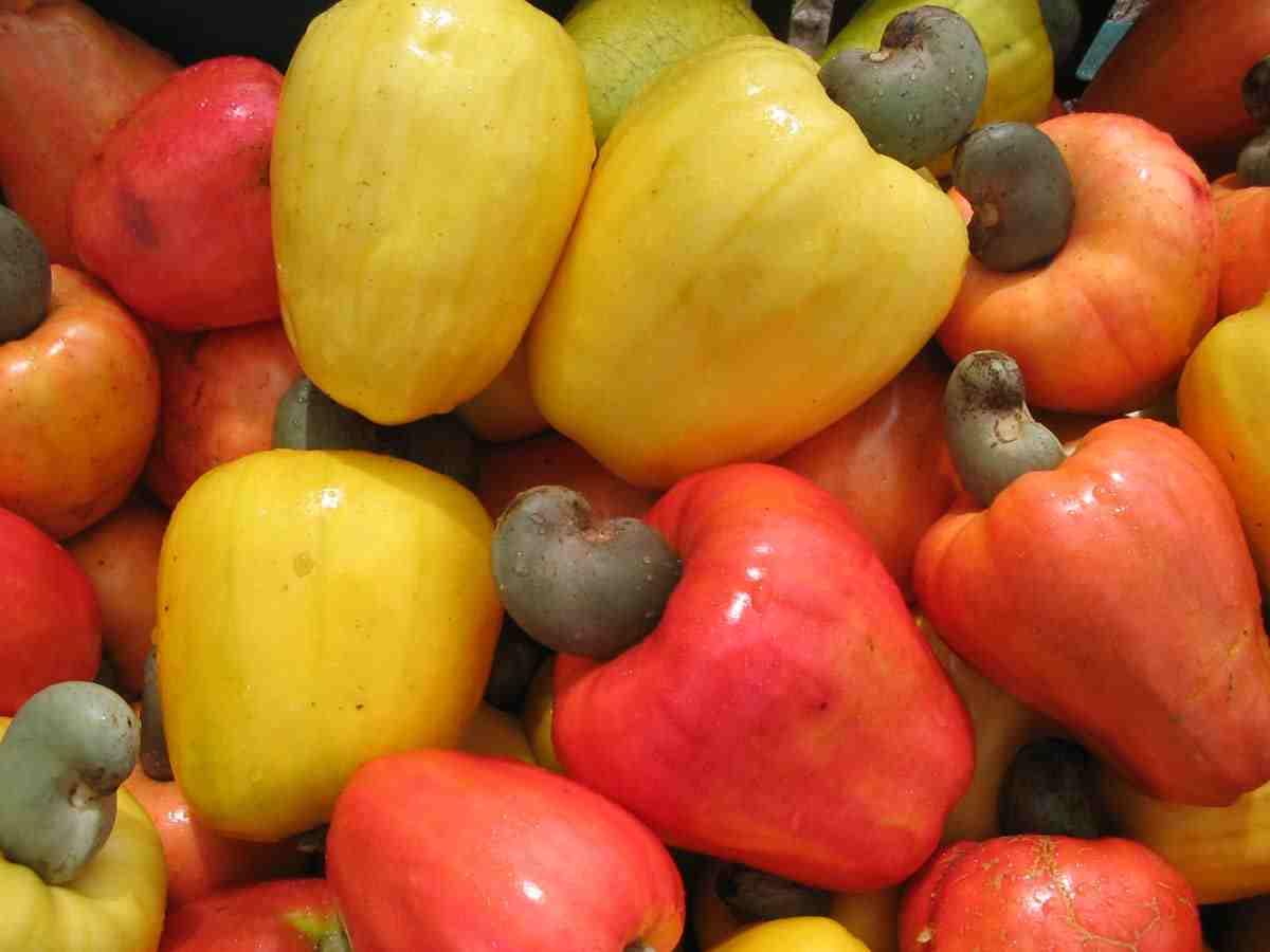 VINACAS prévoit une hausse du  prix des noix de brutes de cajou en 2015