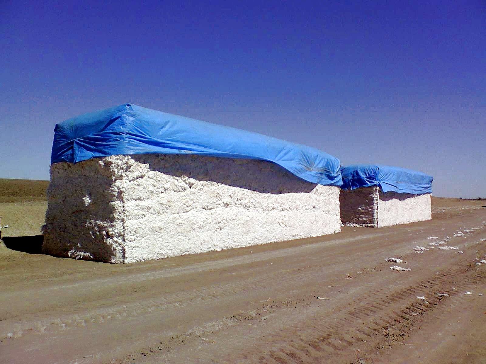 Exportation de fibre de coton