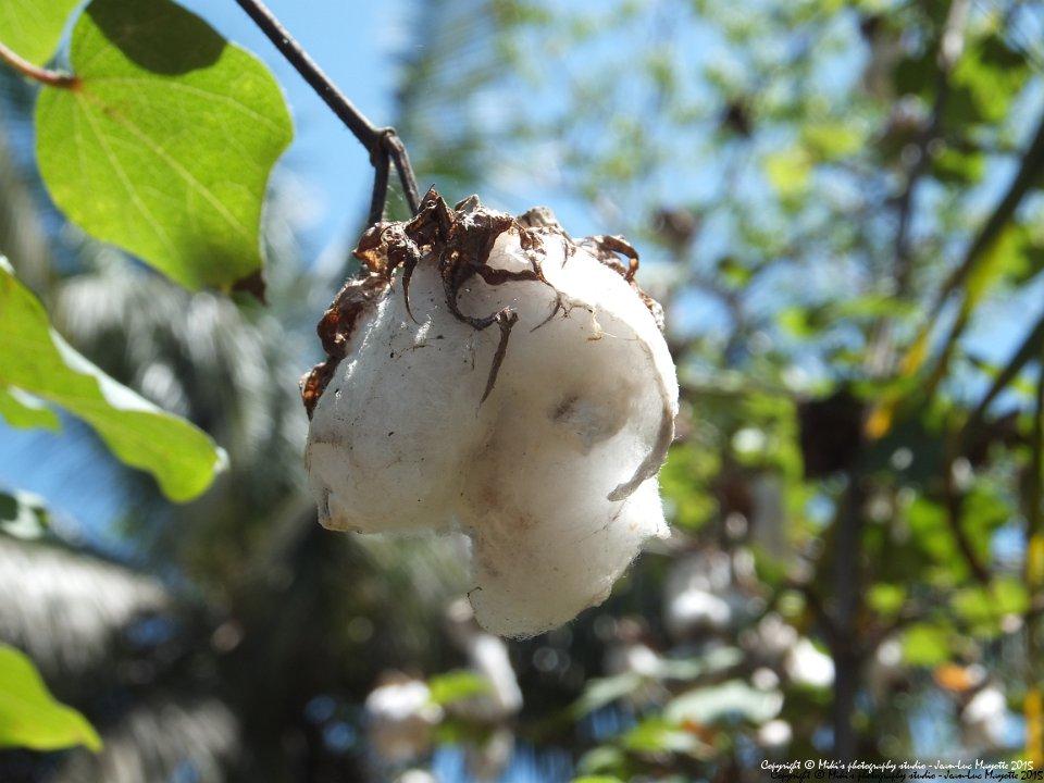 Décision n° 01/COT/DG/SJC/MO/CCA-19  du14 janvier 2020 portant agrément d'exportateurs des produits du coton au titre de la campagne 2020