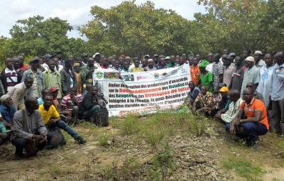 Formation des producteurs sur la reconnaissance et la lutte contre les maladies et ravageurs anacardier 201