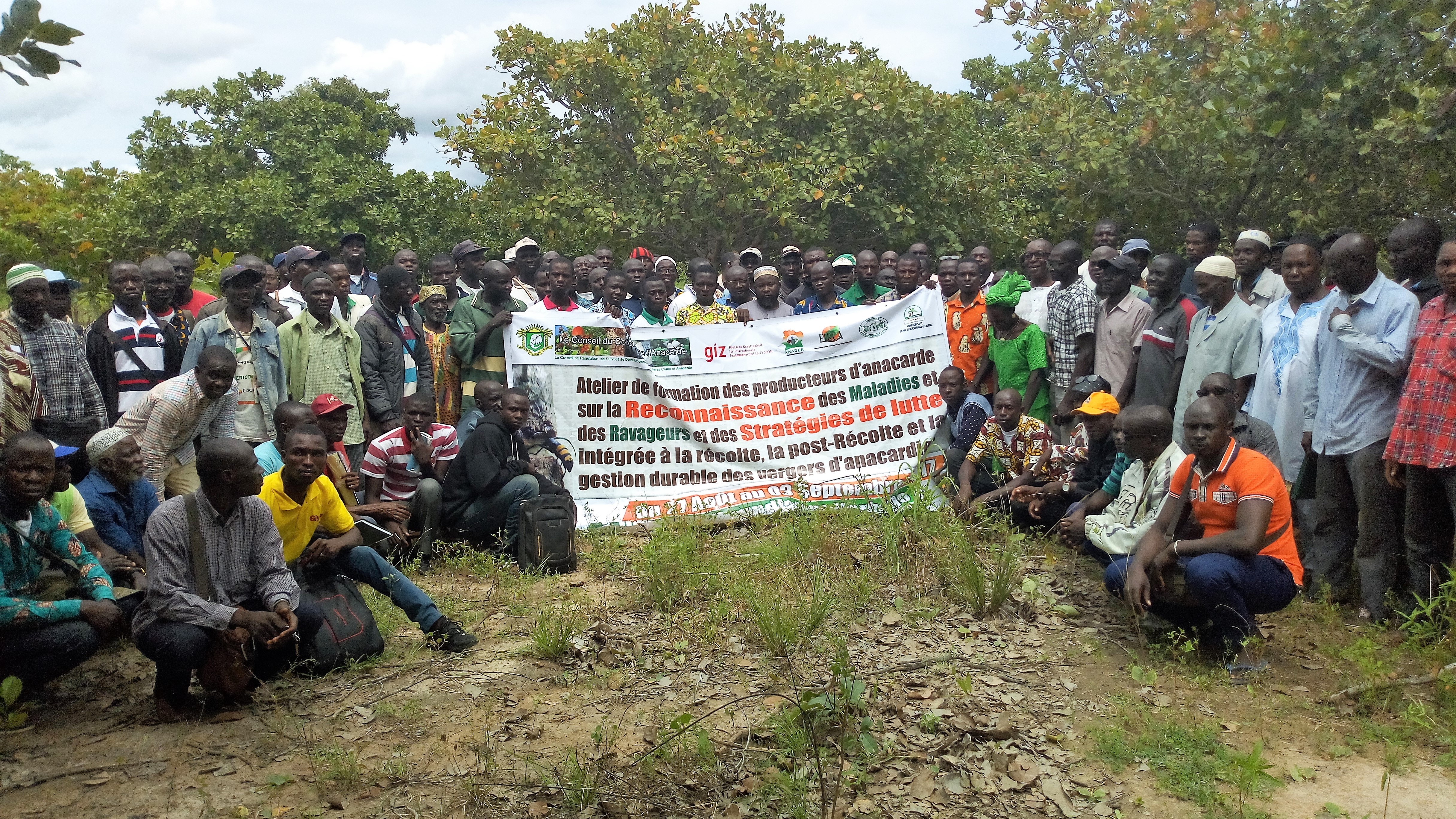 Le Conseil du Coton et de l'Anacarde forme 300 producteurs sur la gestion durable des maladies et ravageurs à Odienné, Boundiali et Korhogo
